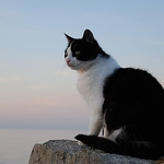 Kediler ve dalgalar –I
