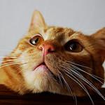 Kediler ve Dalgalar –II