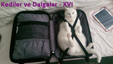 Kediler ve Dalgalar-XVI
